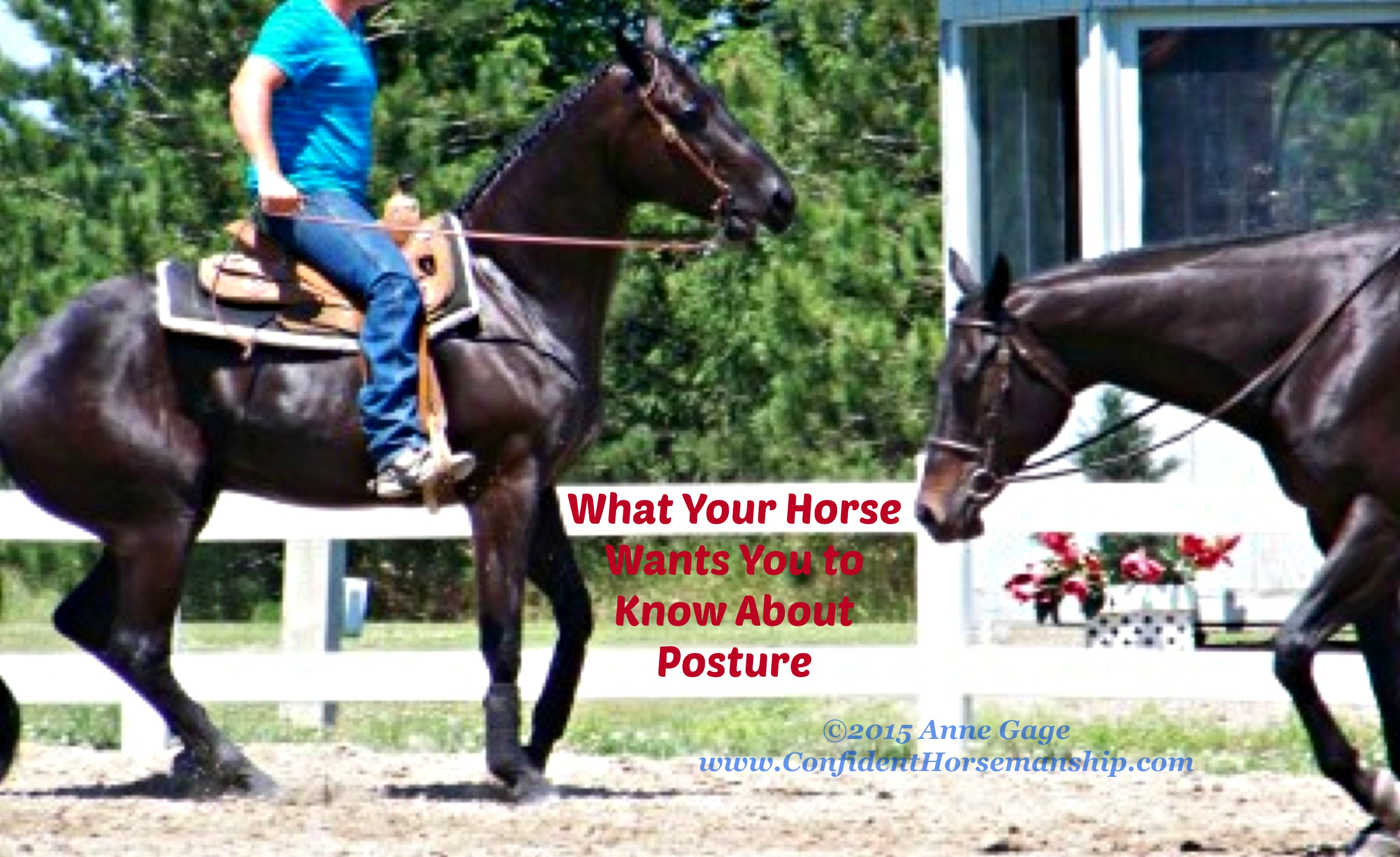 What Your Horse Wants You to Know About His Posture